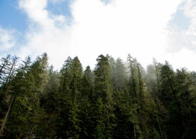 Mt Hood National Forest copy