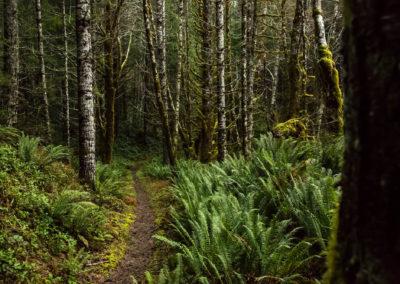 Tillamook State Forest copy
